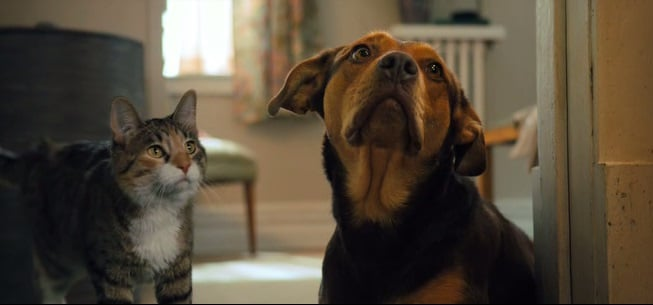 Кадр Путь домой (2019) Встреча с кошкой